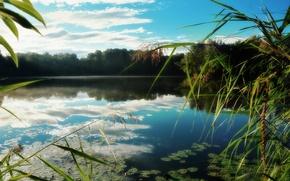 Картинка лес, озеро, отражение, камыш