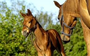 Картинка конь, лошадь, жеребёнок, кобыла