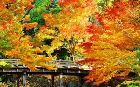 Обои камни, осень, деревья, мост, парк, золотистые, солнечно