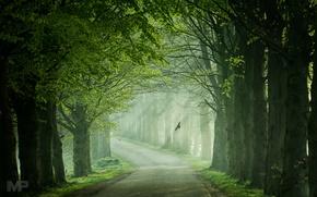 Картинка дорога, свет, деревья, птицы, весна