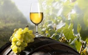 Обои виноград, кисть, вино, бочка, бокал