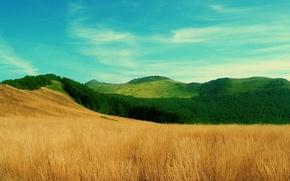 Обои трава, поле холмы