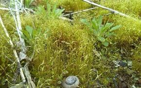 Картинка макро, мох, растения, ракушка