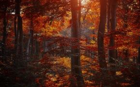 Картинка осень, лес, листья, деревья, природа, желтые, бордовые, багровые