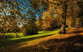 Картинка осень, листья, деревья, ветки, парк