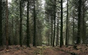 Обои Лес, деревья