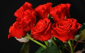 Обои red, roses, flowers, розы, красные, букет