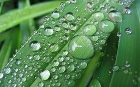 Картинка листья, капли, макро, природа, роса, дождь