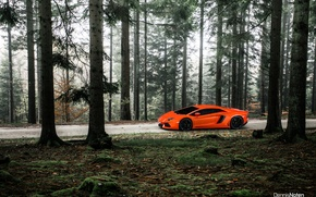 Картинка лес, свет, Lamborghini, Aventador