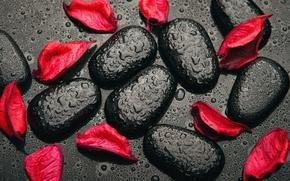 Картинка капли, камни, красное, черное, red, black, лепестки роз, stones, petals