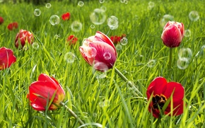 Картинка зелень, поле, трава, цветы, красный, фон, widescreen, обои, луг, мыльные пузыри, тюльпаны, wallpaper, цветочки, широкоформатные, ...