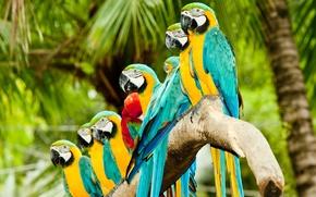 Картинка птицы, попугаи, ара