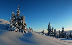 Картинка зима, небо, снег, деревья, закат, холмы, ель, горизонт, мороз
