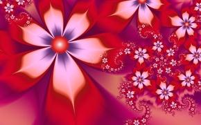 Картинка белый, цветы, красный, лепестки