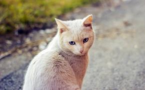 Картинка взгляд, природа, шерсть, Кот