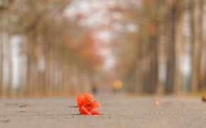 Картинка дорога, цветок, деревья, лепестки