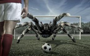 Обои мяч, футбол, паук, тарантул, ворота