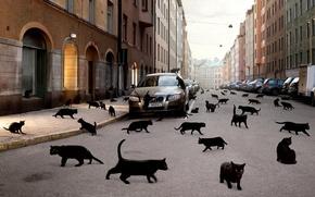 Обои машина, кошки, город, чёрные