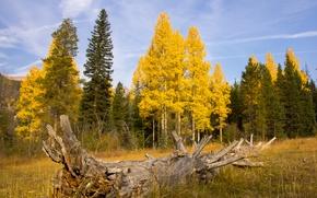 Картинка поле, осень, лес, небо, коряга