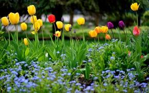 Обои весна, клумба, тюльпаны