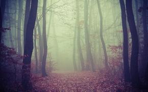 Картинка туман, дорога, деревья, листва, лес