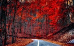 Обои лес, деревья, дорога, листья, осень