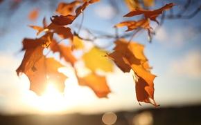 Картинка осень, небо, листья, солнце, свет, ветки, блики, дерево, ветер, клен