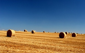 Обои longhorn, небо, поле, тюки