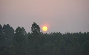 Картинка природа, восход, растения, камбоджа