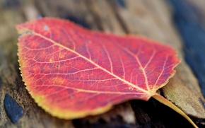 Обои осень, макро, красный, лист, цвет