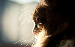 Обои усы, пушистый, Кот, окно, спит, солнце