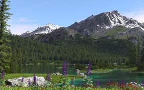 Картинка деревья, цветы, горы, природа, река, хвойные