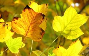 Обои осень, желтый, передний план, желтые листья