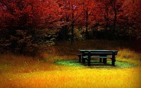 Картинка цвет, осень, трава, скамейка, лес