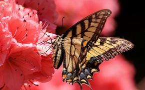 Картинка цветок, бабочка, лепестки, насекомое, мотылек