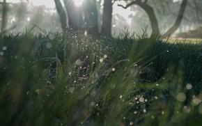 Картинка трава, солнце, природа, grass, sunshine, nature