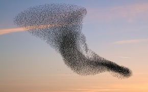 Картинка птицы, стая, вихрь, рой