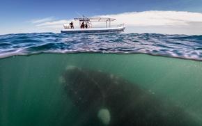 Картинка океан, лодка, кит, ученые, whale under boat