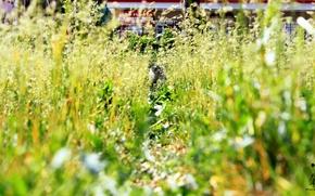 Картинка кошка, животные, трава, кот, Природа, Pyatkov_Denis