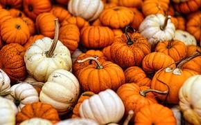 Обои autumn, fall, gourds