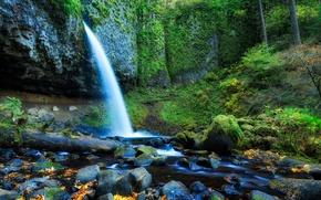 Картинка лес, листья, деревья, камни, скалы, водопад, поток, сша, oregon