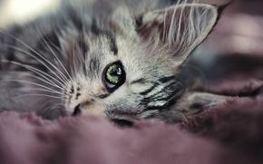 Обои усы, лежит, глаз, кот