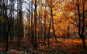 Обои Деревья, Германия, Осень, Way Of Wood