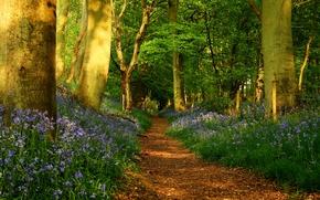 Картинка дорога, лес, деревья, цветы, природа, стволы, тропа, весна, Тропинка, ограда