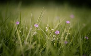 Картинка цветы, макро, фон, растения, природа, обои, поляна, зелень, цветение, лето, фото, трава