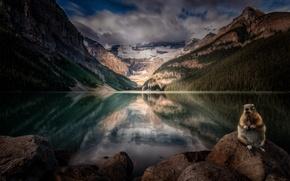 Картинка лес, горы, природа, озеро, Alberta, Lake Louise, Canada, грызун