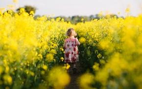 Картинка девочка, настроение, поле, рапс