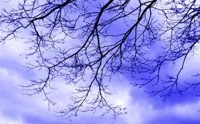 Картинка небо, облака, ветки, тучи
