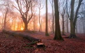 Картинка туман, утро, деревья, лес