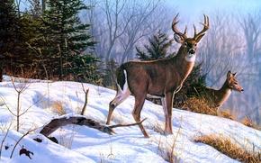 Картинка зима, животные, снег, ель, живопись, олени, On the Ridge, Bruce Miller